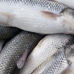 خریدار ماهی آزاد شمال به صورت عمده