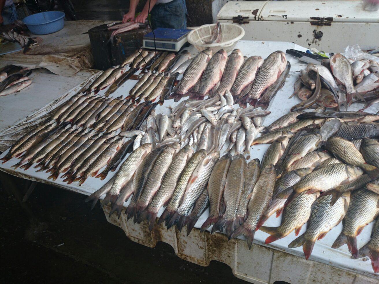 فروشندگان ماهی شمال در مشهد