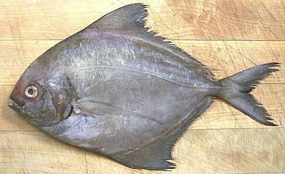 صادرات ماهی حلوا شمال به روسیه