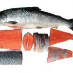 بازار ماهی شمال رودخانه ای بدون تیغ